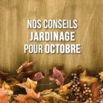 Que faire au jardin au mois d'octobre ?
