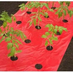 Innovation dans les films depaillage avec ces films coloréspour plus d'efficacité ! Le film de paillagecoloréstimule la croissances des fruits et légumes, tout en évitant le contact direct avec la terre.Il permet également de faire des économies d'eau en réduisant les arrosages, car ils ralentissent l'évaporation de l'eau et évitent le dessèchement de la terre. Leur trous prédécoupésfacilitent la mise en place et évitent de calculer les espaces entre les plantations.Les coloris des films de paillage sont tout particulièrement adaptéspour les tomates, les fraise, les salades, les herbes aromatiques, les pommes de terre et petits et gros légumes.